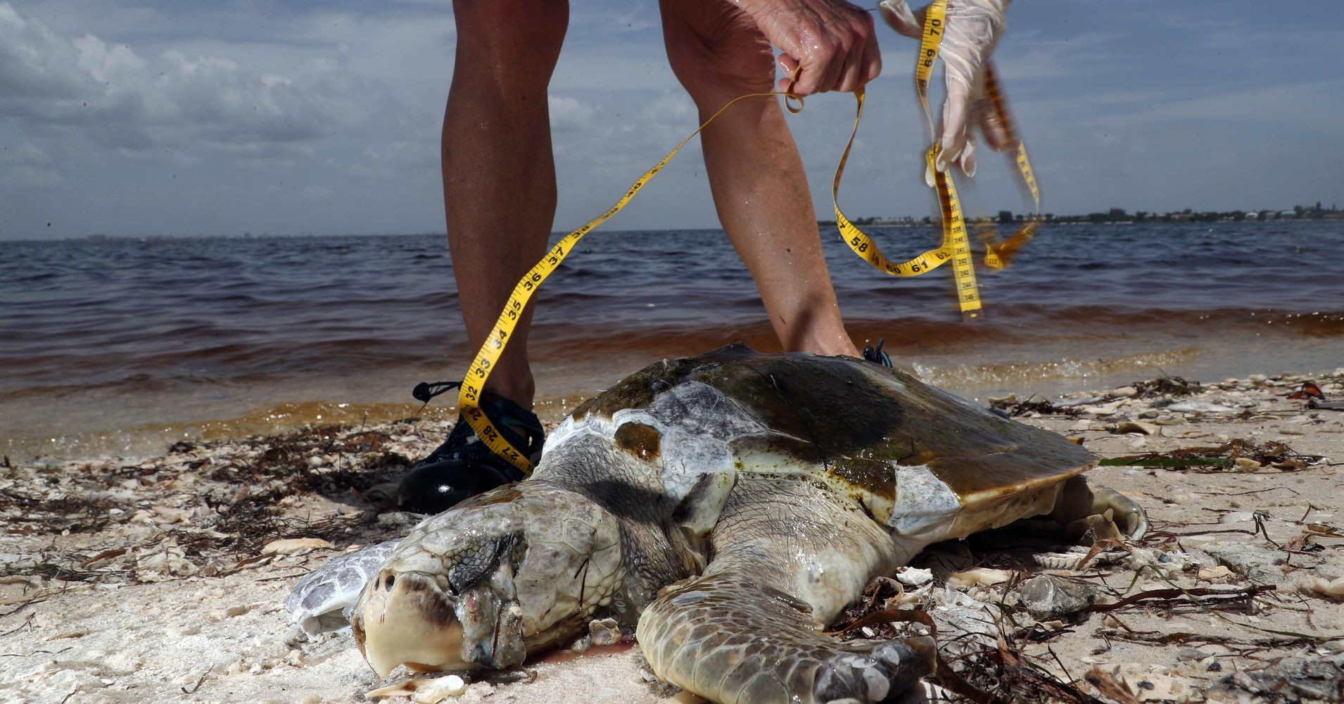 Florida S Toxic Red Tide Is Spreading North Up The Gulf Coast Huffpost