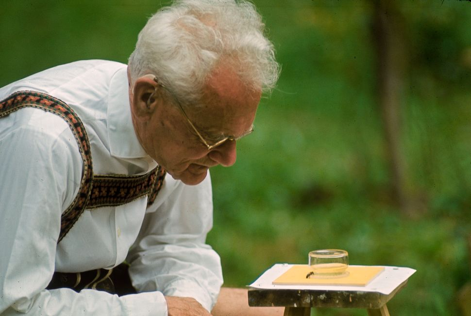 Karl von Frisch testing the ability of bees to perceive color in his home garden in Austria, 1964.