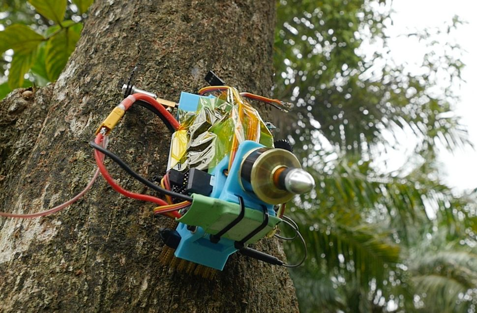 Michael Candy's robot scales a tree.