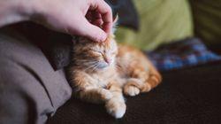 Άνδρας προσβλήθηκε από σπάνια ασθένεια που του μετέδωσε η γάτα του