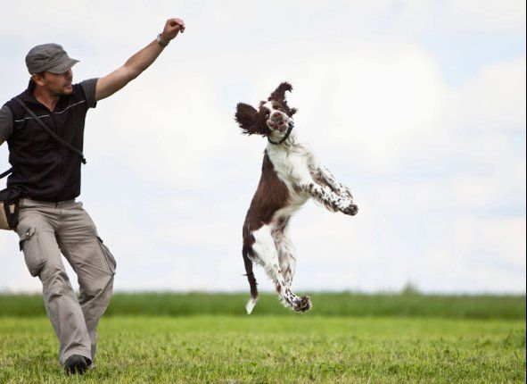 Differences Between Cats And Dogs  Huffpost Life  Differences Between Cats And Dogs
