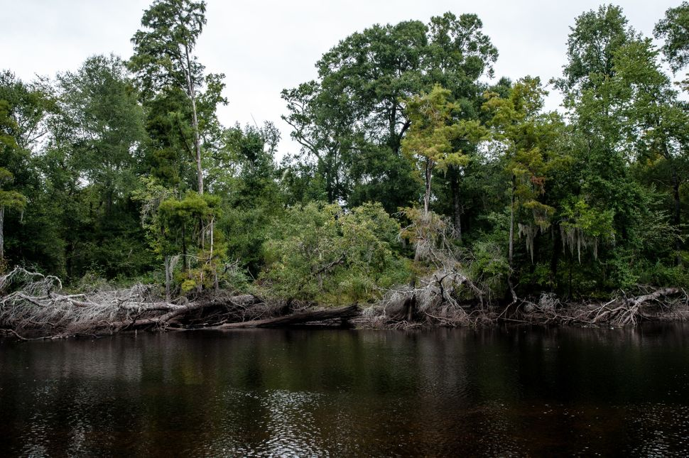 A view of the Lumber River in North Carolina before Hurricane Florence hit.