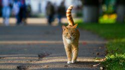Gelsenkirchen: Stadtrat stimmt über Kastrationspflicht für Katzen