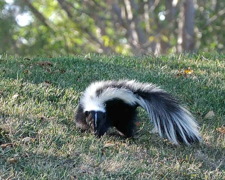 How To Remove Skunk Odor From Outdoor Furniture | HuffPost Life