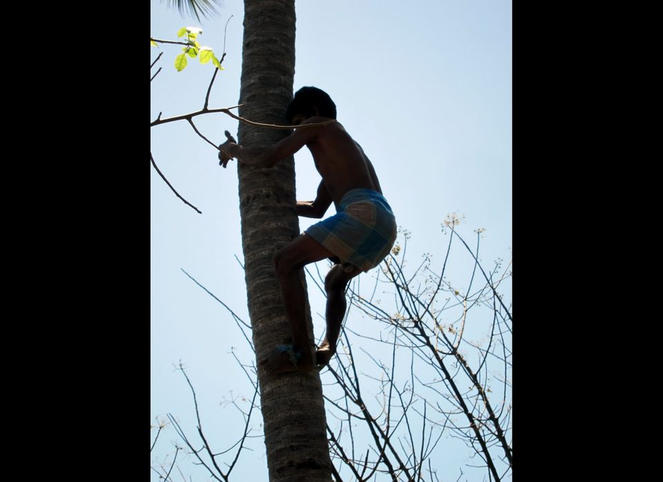 Ever wanted to climb trees for a living? Now you can. Green's Complete Tree & Stump Removal in Birmingham, Ala. is looking fo