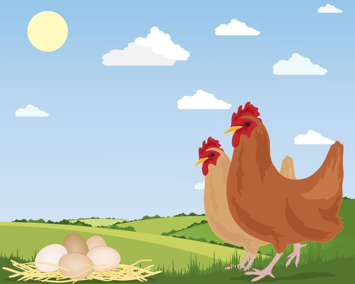 There's Poop in Our Chicken Meat! | HuffPost Life