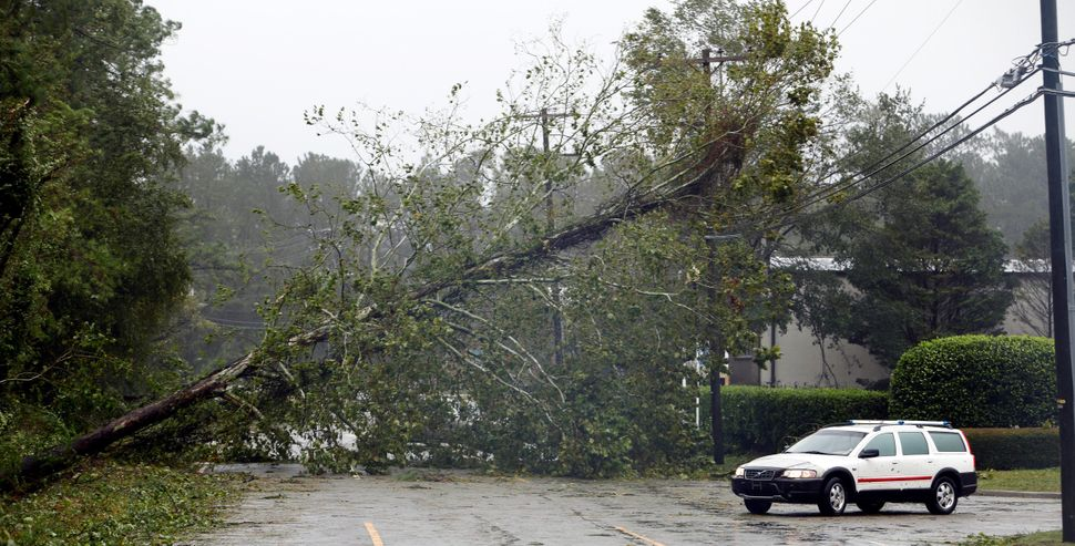 A motorist navigates away from a fallen tree blocking a road after the arrival of Hurricane Florence in Wilmington, North Car