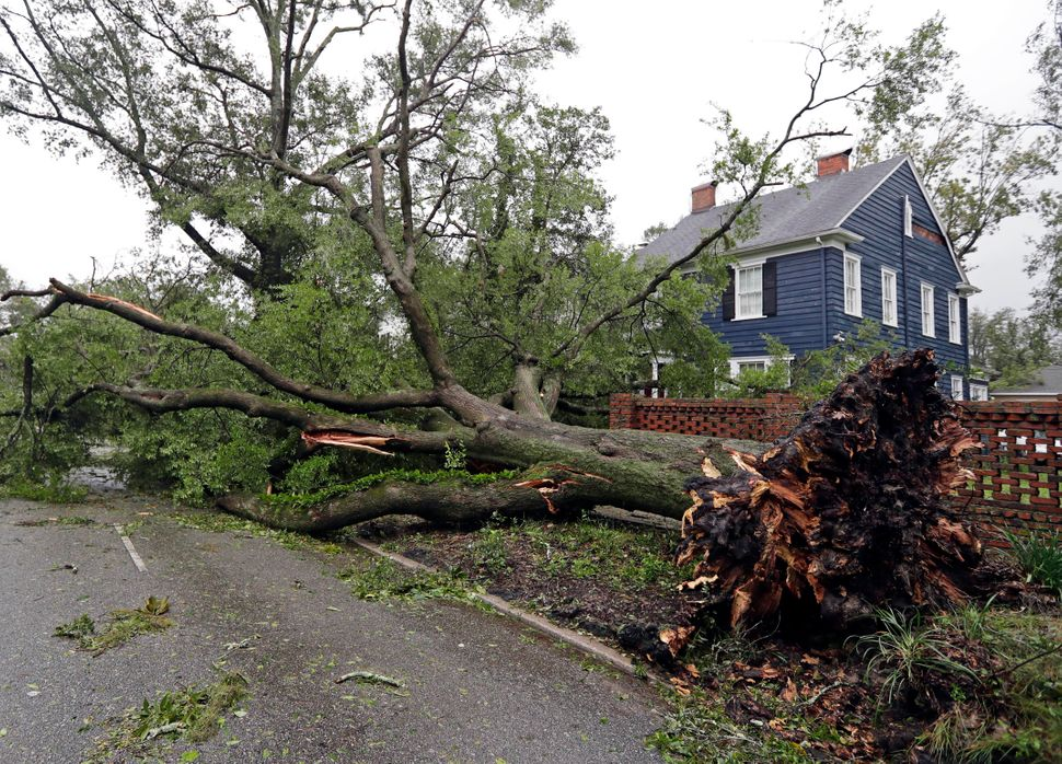A tree uprooted by strong winds lies across a street in Wilmington, North Carolina on Friday.