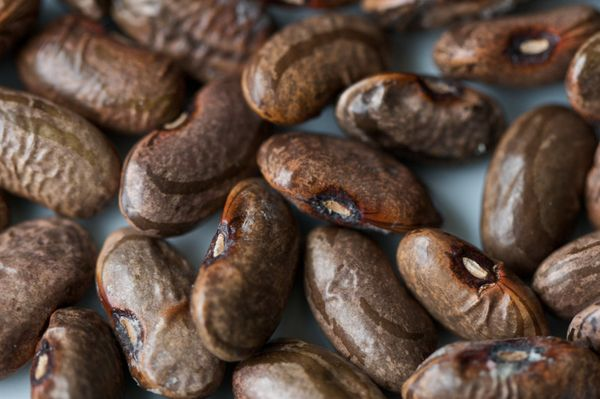 The Dietary Guidelines for Americans say we should be eating more plant proteins. About 1/2 cup of beans provides 7 grams of