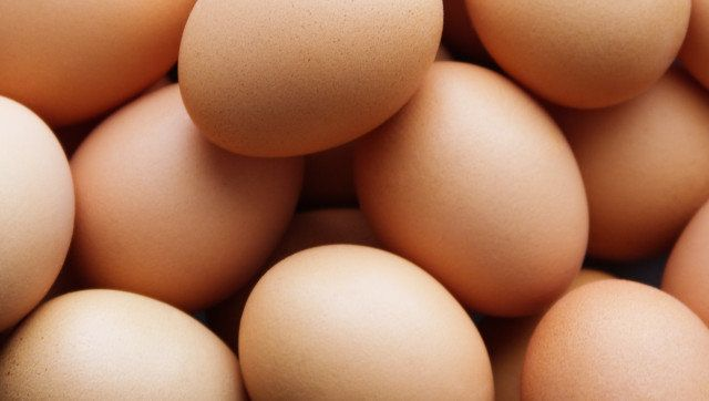background from chicken eggs