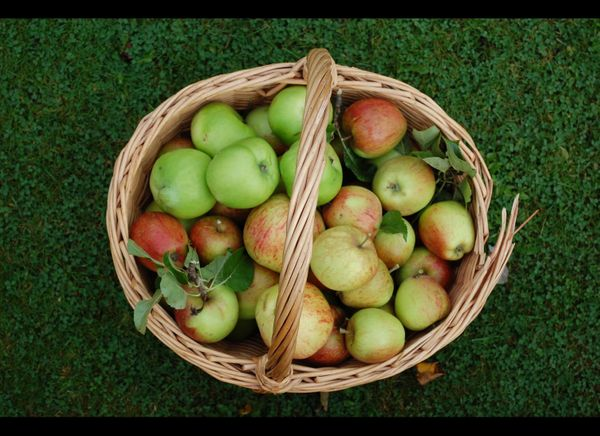 """One medium-sized apple contains about <a href=""""http://nutritiondata.self.com/facts/fruits-and-fruit-juices/1809/2"""" target=""""_h"""