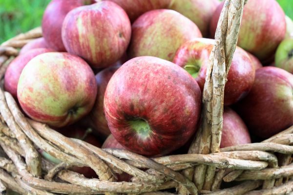 """One component of an apple's peel (which also has most of the fiber) is something called ursolic acid, which was <a href=""""http"""