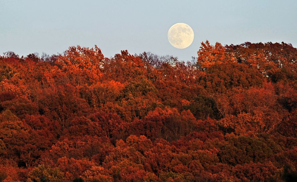 The full moon rises behind a sea of fall foliage along Highway AL-67 near Priceville, Ala. Wednesday, Nov. 9, 2011. (AP Photo