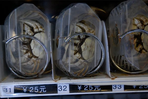 If you're seeking hairy crabs and all the shops are closed, you'll be happy to stumble upon one of these machines in China. I