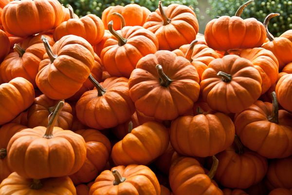 "A cup of cooked, mashed pumpkin contains <a href=""http://nutritiondata.self.com/facts/vegetables-and-vegetable-products/2601/"