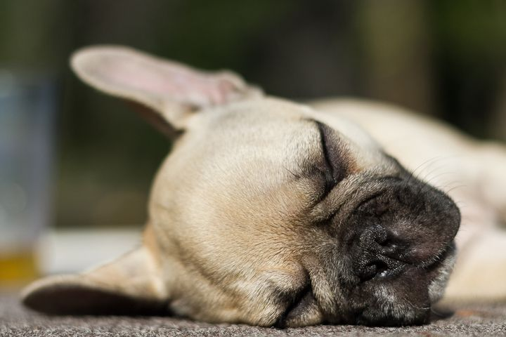 How To Get Your Dog To Sleep In | HuffPost Life