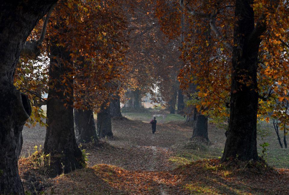 Kashmiri Muslims walk near maple trees on a late autumn day in Srinagar.   (TAUSEEF MUSTAFA/AFP/Getty Images)