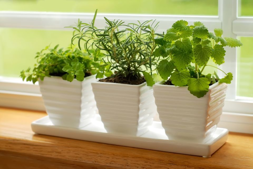 Bringing plants from the garden into any room of the house is a great way to revitalize your home. If you don't tend to a gar