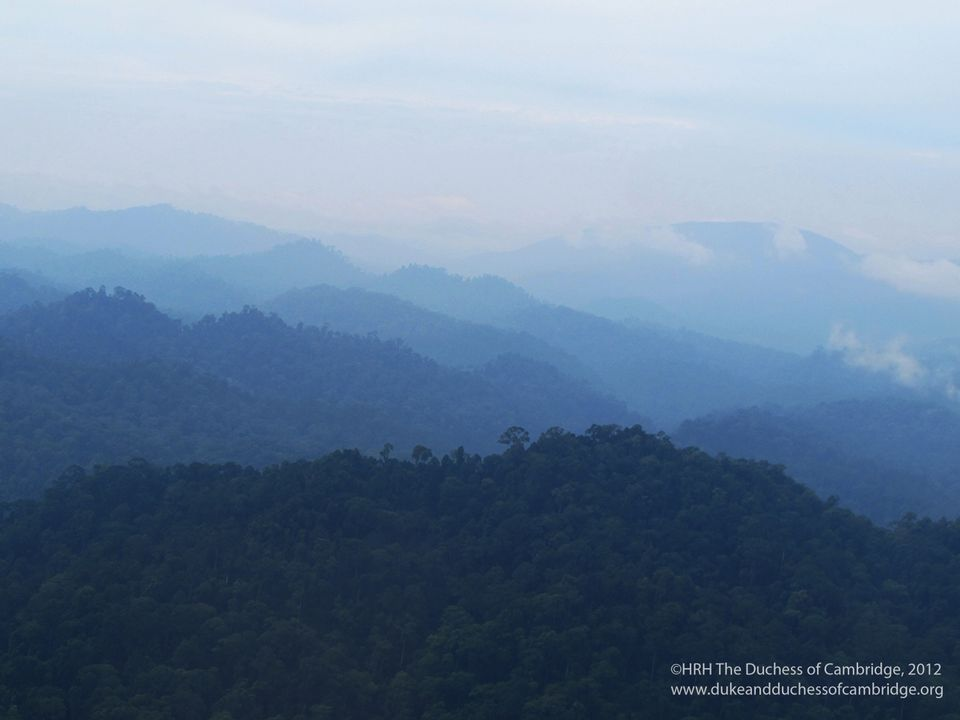 A view of the Borneo rainforest, one of the oldest in the world.