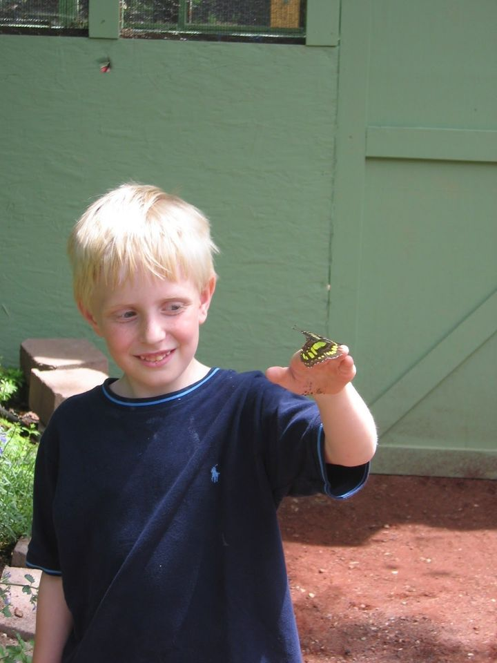 A young boy holds a butterfly. The boy has an undiagnosed mental illness.