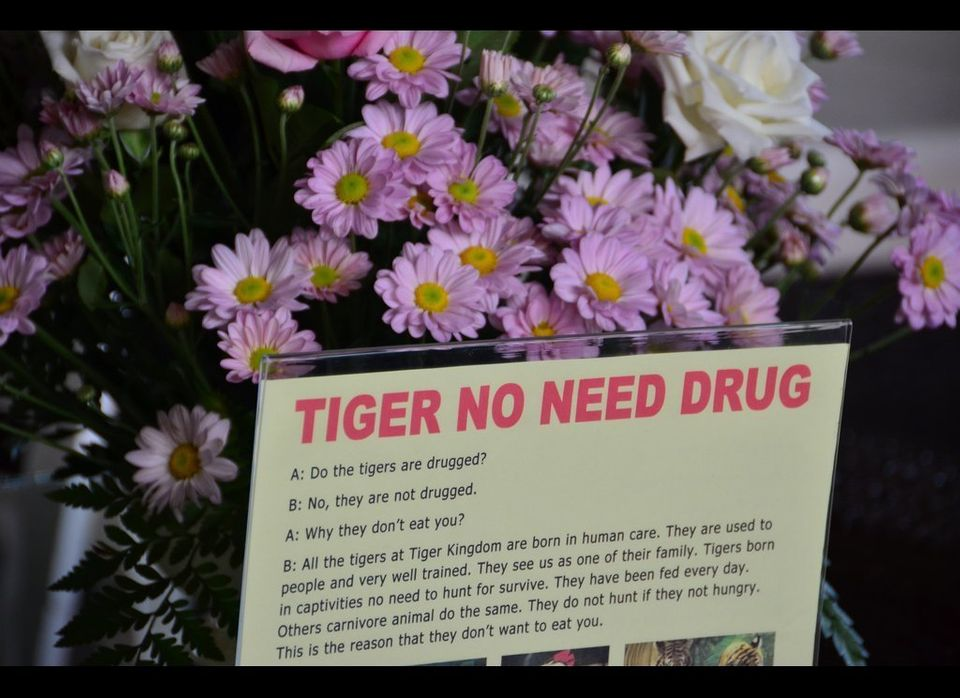 Tiger Kingdom in Chiang Mai begins assuring you that its tigers are not drugged almost as soon as you enter. After you select