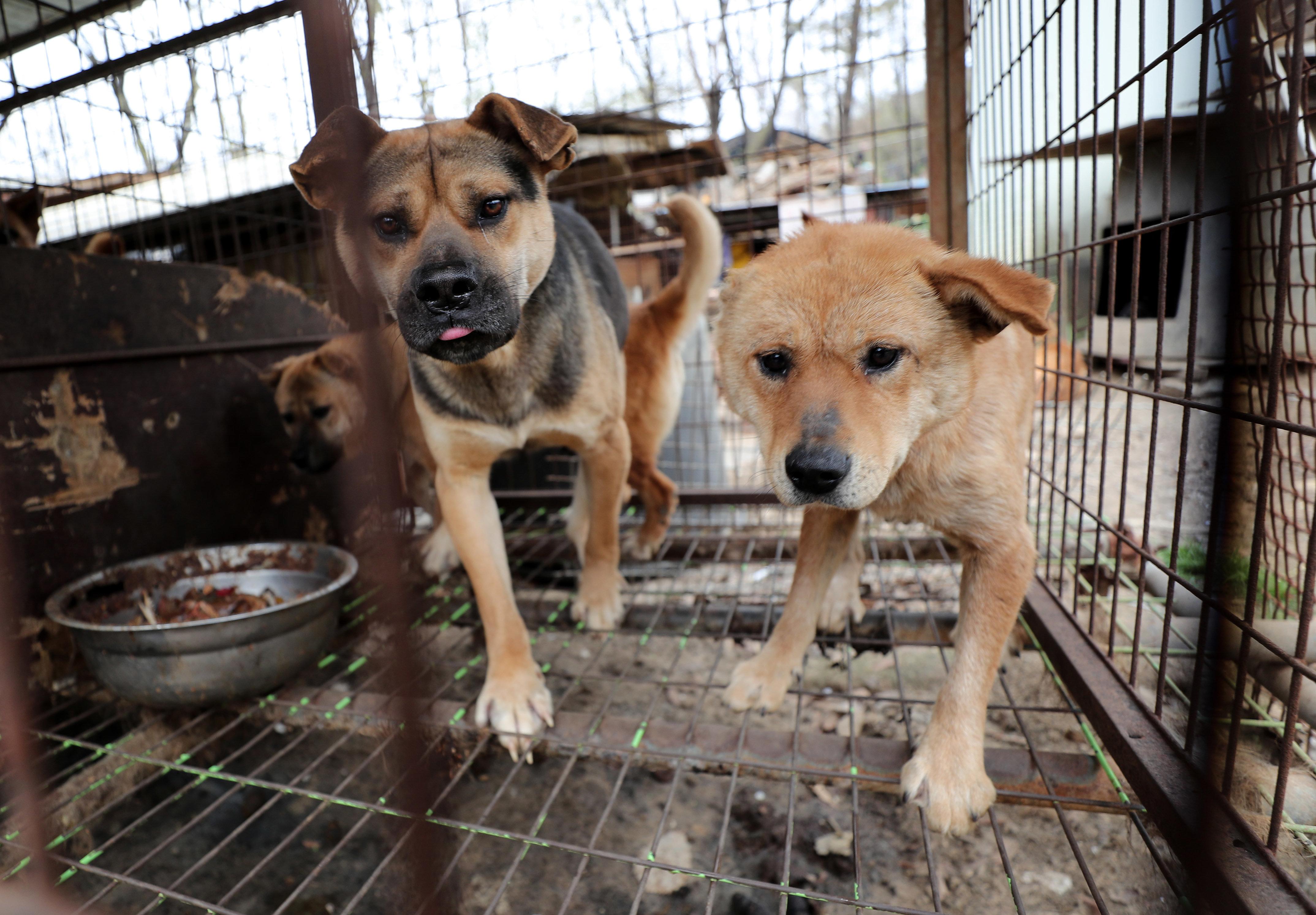 개를 돼지·닭과 같은 방법으로 도살하는 건 '무죄' 주장에 대한 대법원