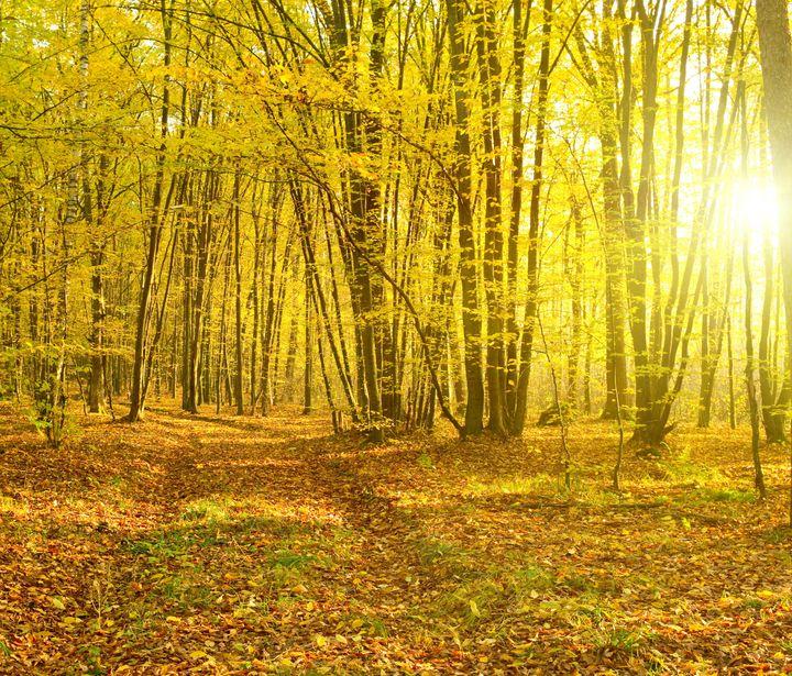 sunbeams pour into the autumn...