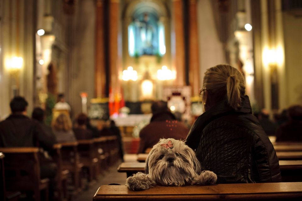 A dog looks over the back of a pew as people take part in a mass at San Anton Church in Madrid, Thursday, Jan. 17, 2013, in h
