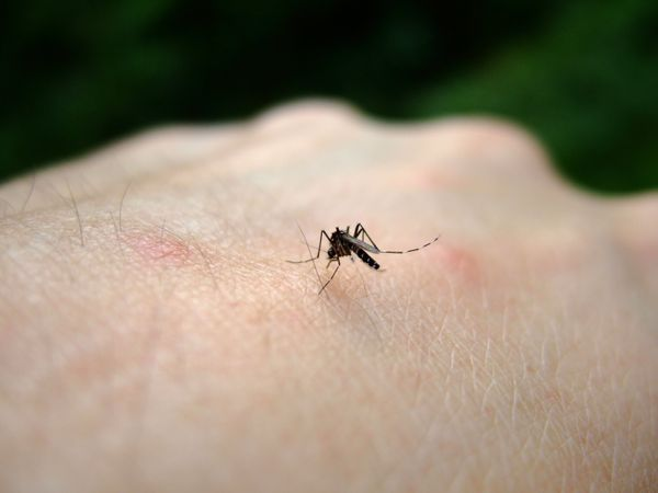 """During the summer of 2012 -- when <a href=""""http://www.huffingtonpost.com/2012/09/26/west-nile-virus-cases-400_n_1916954.html"""""""