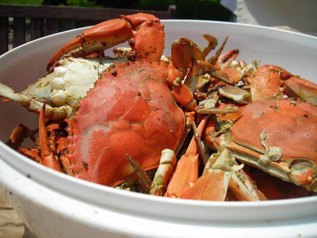 "<strong>Get the <a href=""http://www.coconutandlime.com/2008/06/how-to-steam-blue-crabs.html"">Steamed Blue Crabs recipe from C"
