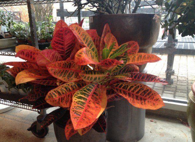"All about <a href=""http://www.huffingtonpost.com/tara-heibel/houseplants_b_2500771.html"">house plants</a>."