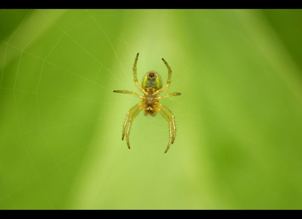 <strong>What Do They Mean?</strong>  Spiders are associated with manipulation because of the webs -- and the traps -- that