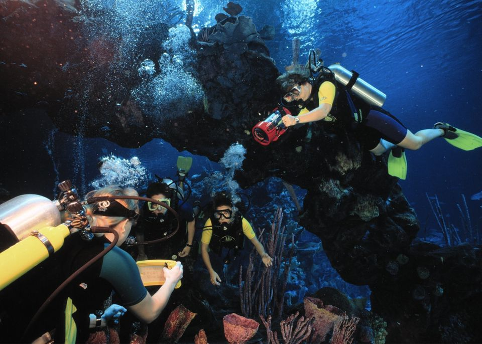 "Certified divers can enjoy an underwater view of The Seas with Nemo & Friends with <a href=""https://disneyworld.disney.go.com"