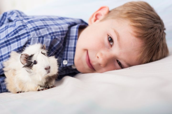 young boy with guinea pig