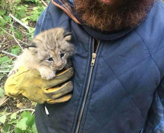 Mann denkt, er rette kleines Kätzchen – dann merkt er, was es wirklich