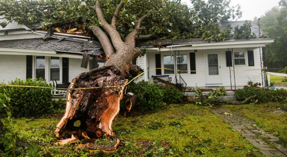 A downed tree rests on a house in Wilson, North Carolina.