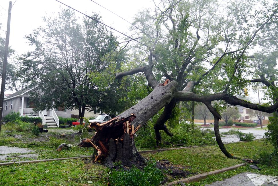 A downed tree in Wilmington, North Carolina.