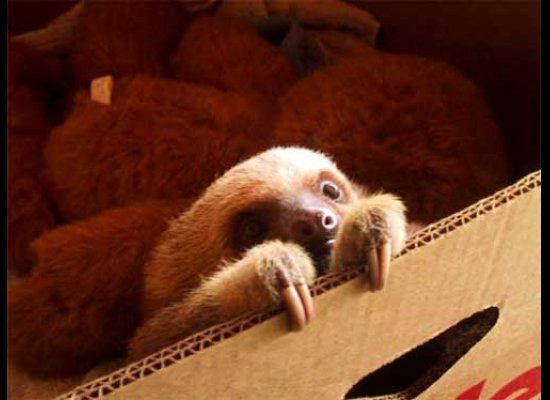 Hello! I'm cute.