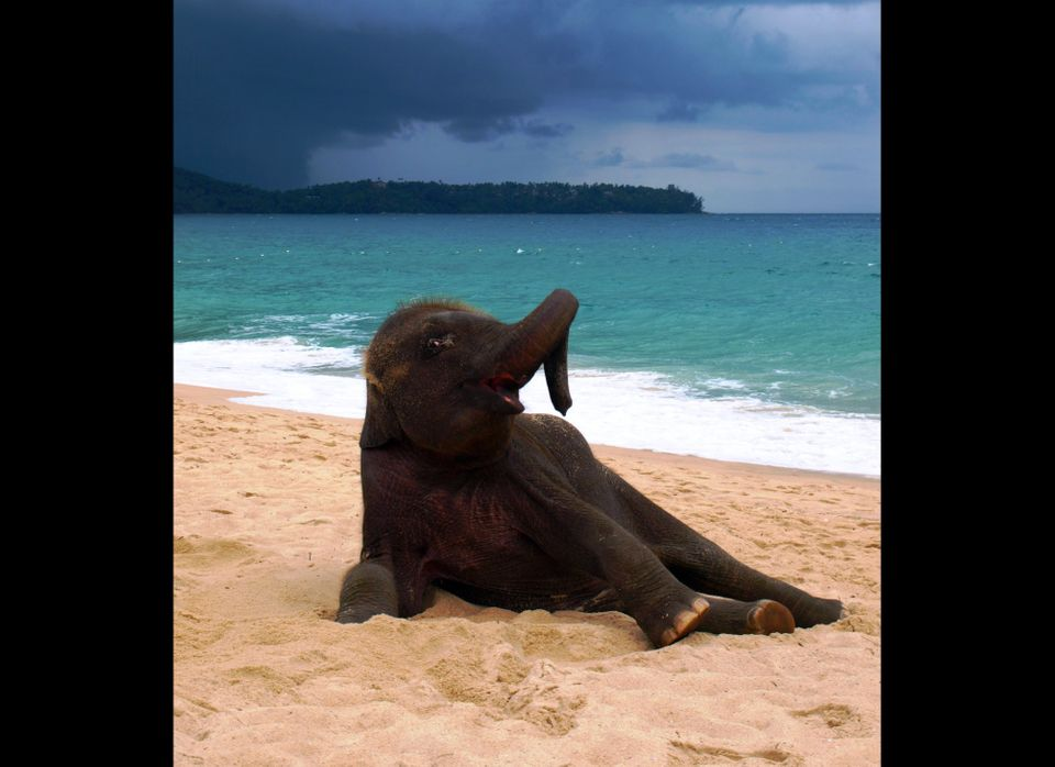 A female elephant enjoys some time on the beach in these photos by John Lindie.