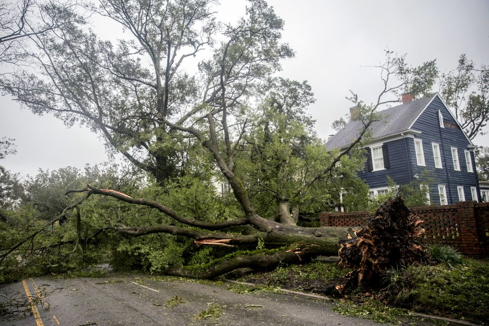 A fallen tree lies in front of a home in Wilmington, North Carolina.