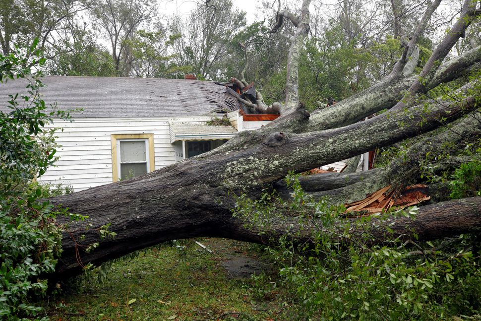 A large oak tree sits on houses in Wilmington, North Carolina.