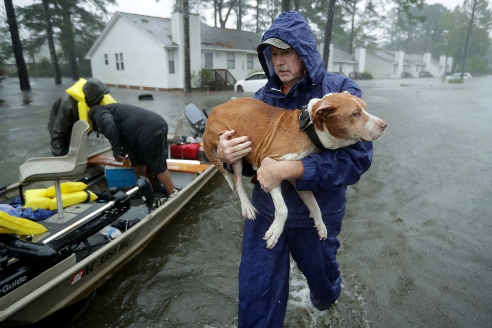 Volunteers from across North Carolina help rescue residents and their pets from their flooded homes in New Bern.