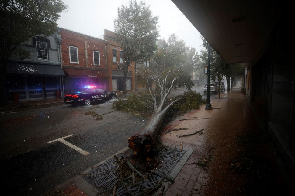 A collapsed tree in New Bern.