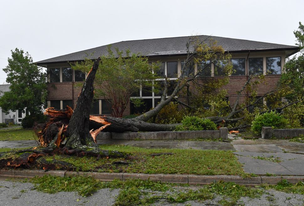 A downed tree rests on a building in Wilmington.