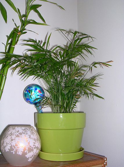 """The attractive bamboo palm also made <a href=""""http://www.huffingtonpost.com/2009/02/10/nasas-guide-to-the-best-p_n_165588.htm"""