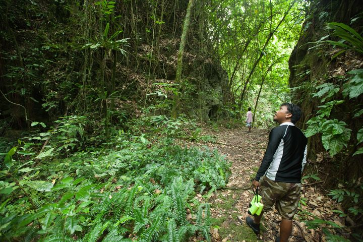Hiking in tropical rainforest jungle, Palau, Micronesia