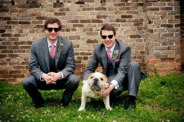 Wedding Dogs The Cutest Best Man Ever Photo Huffpost Life