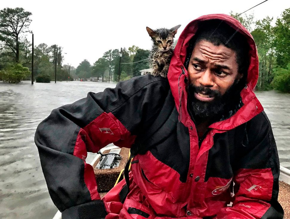 "Robert Simmons Jr. and his kitten ""Survivor"" are rescued from floodwaters after Hurricane Florence dumped several inches of r"