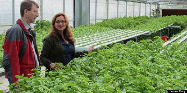 Local Farming Void? Military Veterans Are Answer