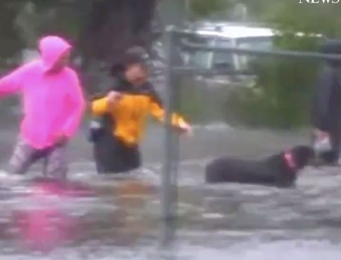 Reporter interrupts Florence live stream to save dog